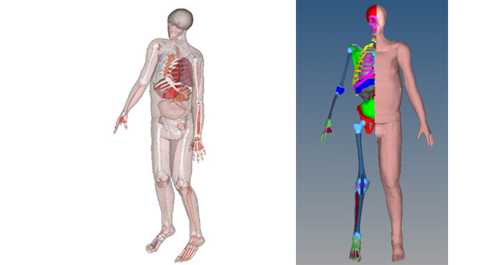 Overview of HUByx. Right image shows view of HUByx skeleton and skin