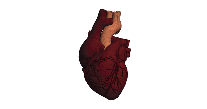 Heart model built in HyperMesh
